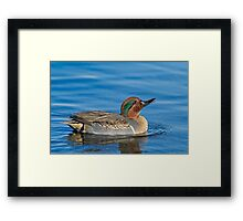 Sipping water Framed Print