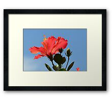 Coral Hibiscus Flower Reaching for the Sky Framed Print