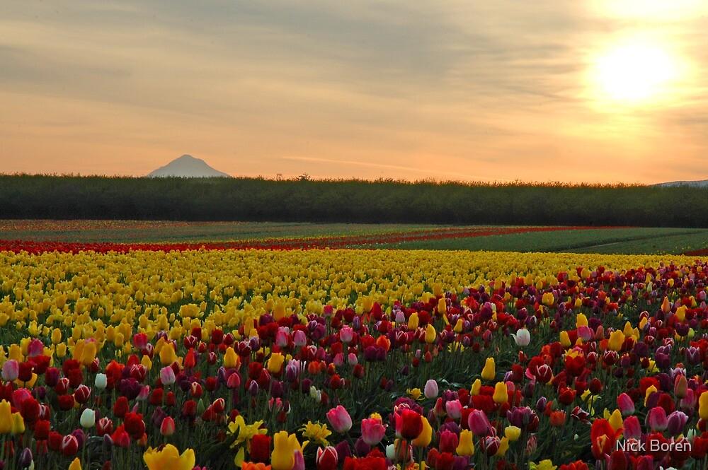 Tulips At Sunrise by Nick Boren