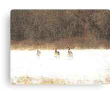 High tailing it out Canvas Print