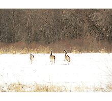 High tailing it out Photographic Print