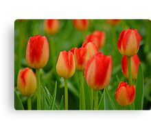 A Tapestry Of Tulips Canvas Print