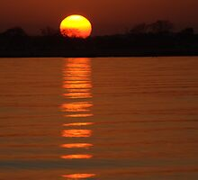 Trailing Sun by Karol Livote