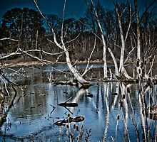 Fall Reflections by Marcia Rubin