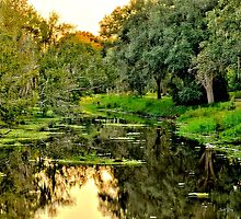 Sawgrass in HDR #2 by Jeff Ore