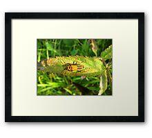 Leatherback Beetle Framed Print