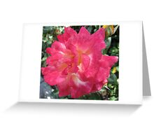 Pink And White Beauty Greeting Card