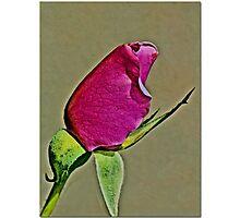 Pink Bud Photographic Print