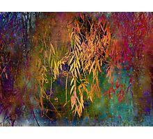 Wild Willow Photographic Print
