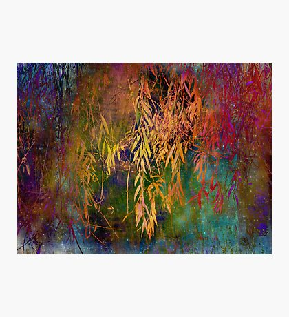 Wild Willow Photographic Print
