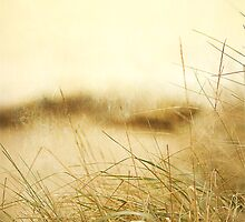 Foggy Day at the Beach by Rebecca Cozart