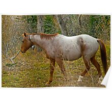 Roan Bell Horse in Autumn Forest by Donna Ridgway Poster