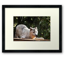 Happy Wolf Framed Print