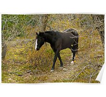 Black Horse in Autumn Forest by Donna Ridgway Poster