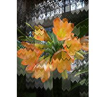 Flowers Missoni Photographic Print