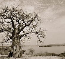 Baobab with a view by Gigi Guimbeau