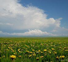 Infinite Flower Field by VigStudio