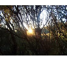 Late Afternoon Photographic Print