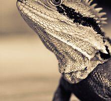 Willard the lizard.  by Carly19