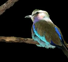 Lilac Bellied Roller (View Large) by deborah zaragoza
