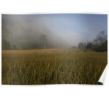 Mist over the rice paddy Poster