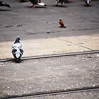Pigeon Crossing  by theredtree