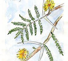 "Acacia ""karroo"" sketch by Maree  Clarkson"