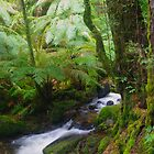 Cement Creek (2) Yarra Ranges NP by Bette Devine