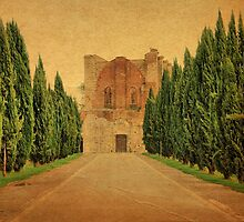 Cypress Lane-San Galgano, Tuscany by Deborah Downes