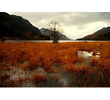 """""""TREE ON THE LOCH"""" Photographic Print"""