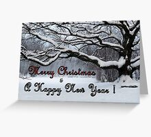 Holy Oak for Christmas Greeting Card