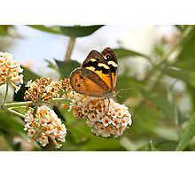 Beautiful Brown Photographic Print