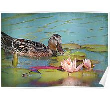 The Female Mallard &The Waterlily Poster