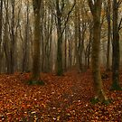 Barhill Woods by Brian Kerr