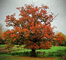 Autumnal Tree by buttonpresser
