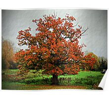 Autumnal Tree Poster
