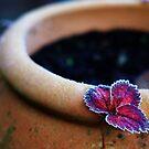 Strawberry leaf by nazboo