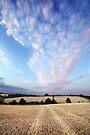 Through Rose Tinted Skies by Andy Freer