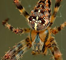 Arachnophobia! by Gene Walls