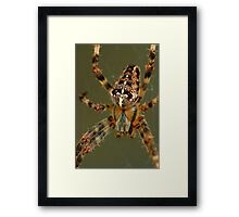 Arachnophobia! Framed Print
