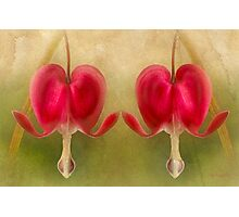 Teardrops Of The Heart Photographic Print