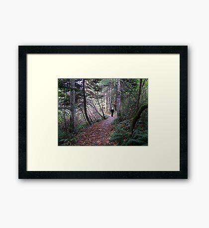 Woodland Trail Framed Print