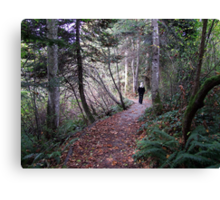 Woodland Trail Canvas Print