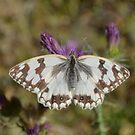 Butterfly by MONIGABI