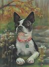 Boston Terrier in the Park by Pam Humbargar