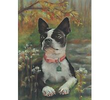 Boston Terrier in the Park Photographic Print