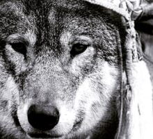 Native American Wolf  Sticker