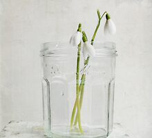 Bonne Maman Jar with Snowdrops by Fiona Sami