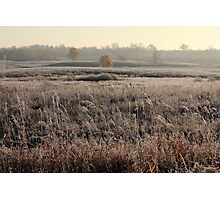 First frost in grassland at autumn time Photographic Print