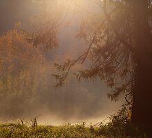 Peaceful Landscapes by Karol Livote